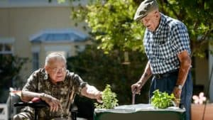 Two senior men gardening